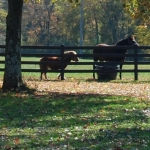 two-horses-close-up-in-fall