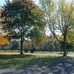 two-horses-from-a-distance-in-fall