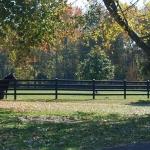 two-horses-from-medium-range