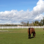 pasture-with-horses-white-4-rail