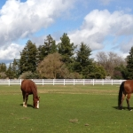 pasture-with-horses-white-4-rail-1
