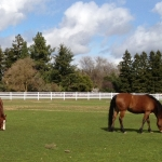pasture-with-horses-white-4-rail-2