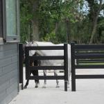 steel-board-gate-4foot