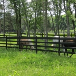 fence-line-with-horses