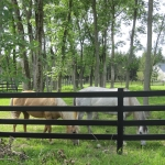 close-up-of-both-mares-inside-fence