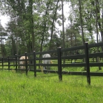 fence-line-with-horses-2