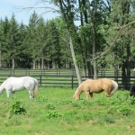 pasture-shot-with-horses-cropped