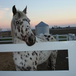 buckley-fence-4