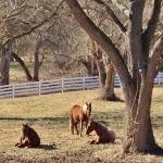 ali-lazy-horses