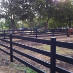 fence-line-corner-pasture-with-horse