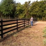 fence-line-with-clint