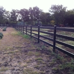 fence-line-with-horse-2