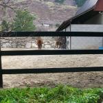 buckley-fence-utah-11