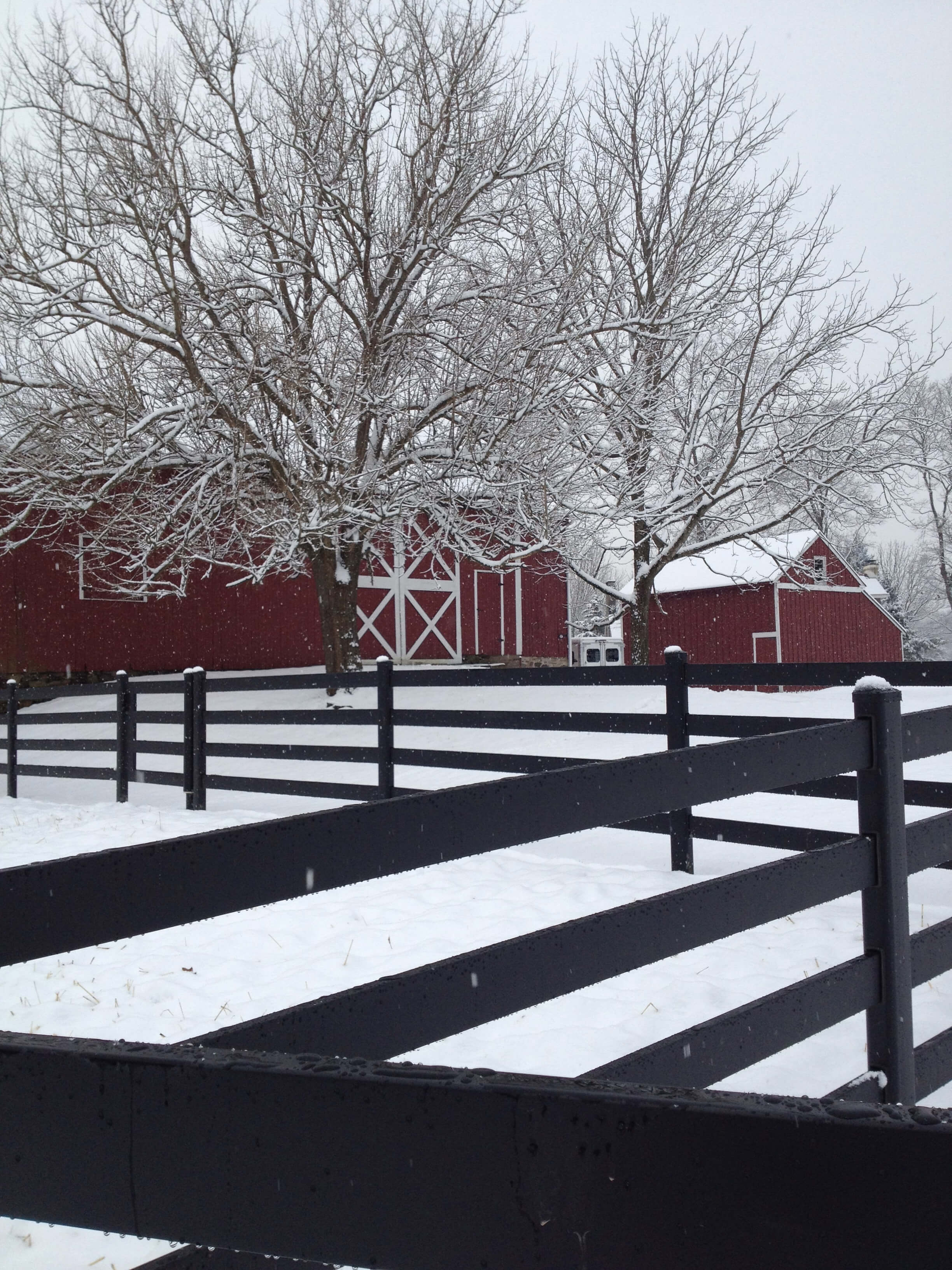 Steel Board Horse Fencing |