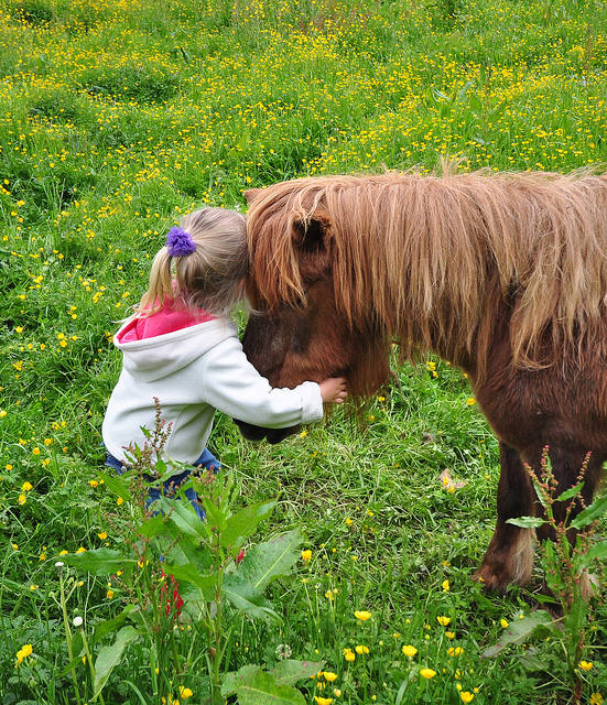 So Your Daughter Wants a Pony
