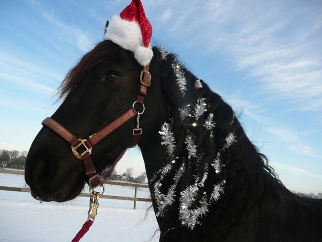 christmas-horse1