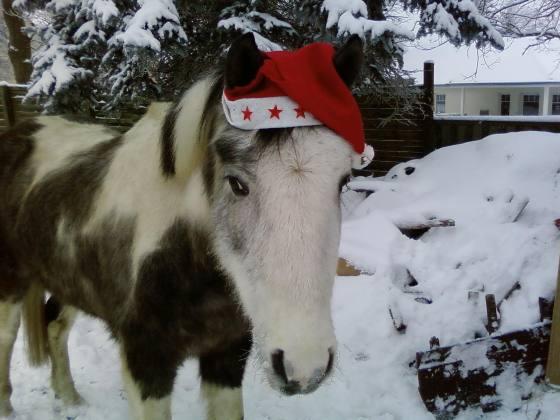 christmas_pony