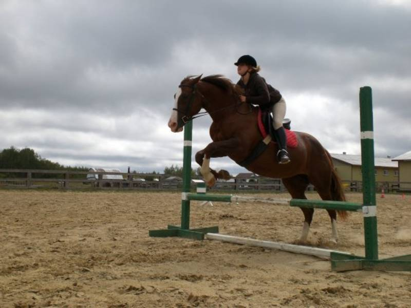 Keeping Your Heart Healthy with Horses