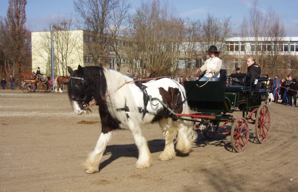 London Cart Horse