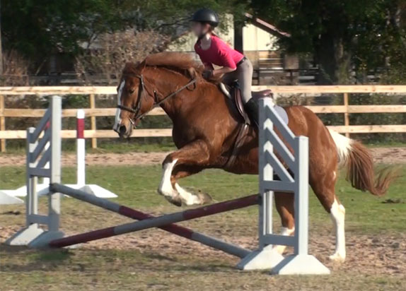 how to teach your horse to jump