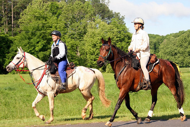 Tips for Summer Trail Riding
