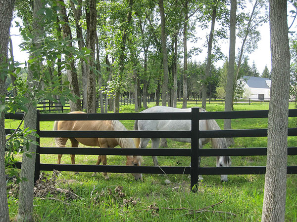 Design Your Fence to Suit the Needs of Your Property