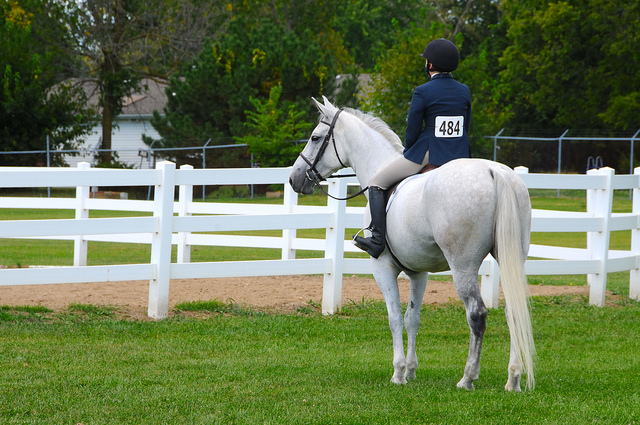 4971229506_1b3e93d823_z Keeping your Horse Stress Free at Shows