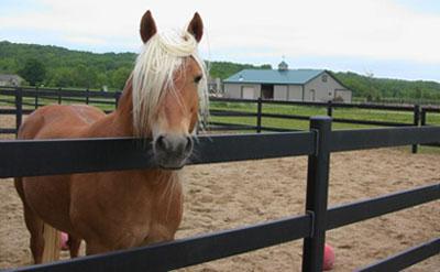 horse-fencing-1