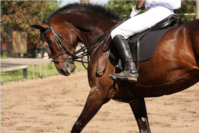 Human leg on horse