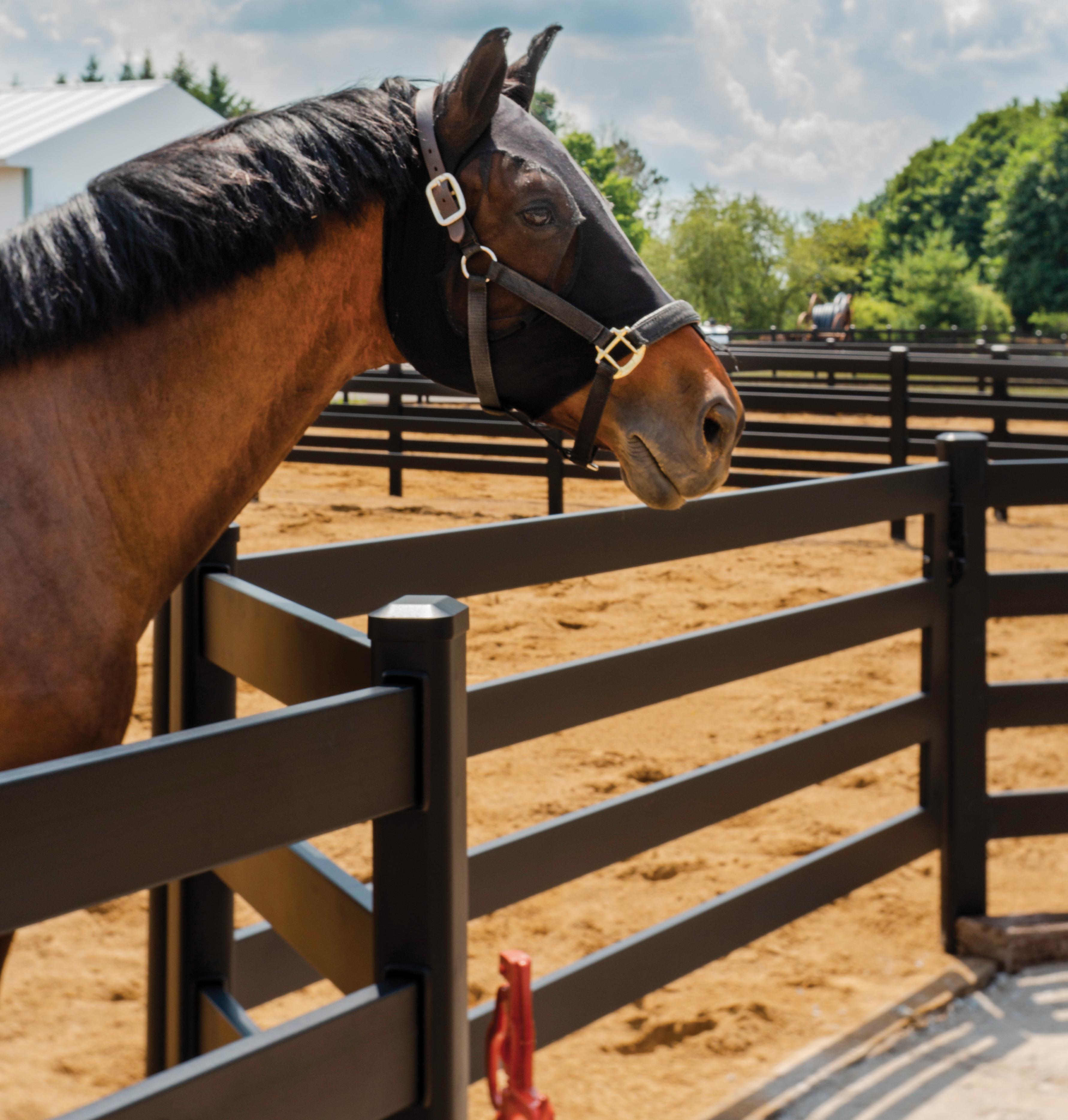 Steel Horse Fencing Buckley Fence Llc
